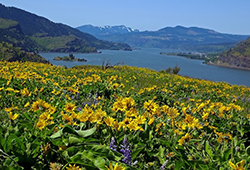 Ed Caswell's Bequest Strengthens Friends of the Columbia Gorge Land Trust